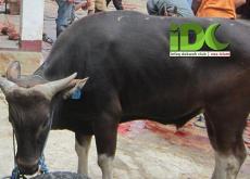 Qurban IDC di Daerah Binaan Dakwah Pinggiran Bekasi (1)